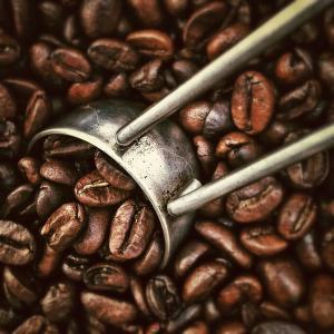Teuerste Kaffeebohne Der Welt